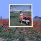 Poppies (2010)